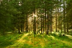 18 сентября День работников леса