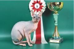 13 июля прошла первая в мире выставка кошек