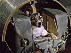 3 ноября В СССР совершен запуск космического аппарата «Спутник-2» с собакой Лайкой на борту