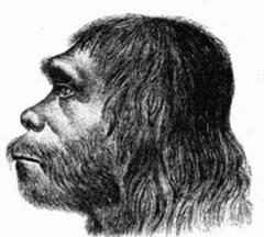 4 февраля Научной общественности впервые представили неандертальца