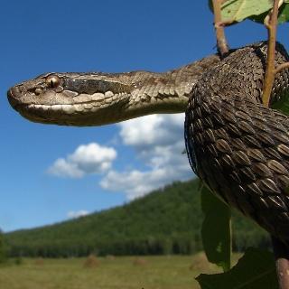 Змея? Не проблема!
