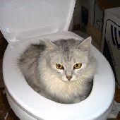 Что нельзя смывать в канализацию