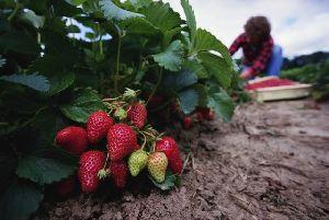 Лунный календарь садовода-огородника на май 2013 года