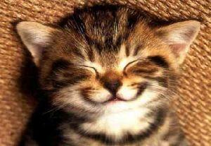 Удивительные факты, которые заставят вас улыбнуться