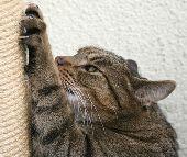 Вредные привычки кошек