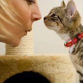 Чем можно заразиться от кошки: мифы и факты