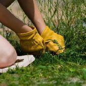 Чистый огород. 5 способов борьбы с сорняками