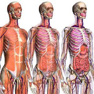 7 малоизвестных фактов о нашем теле