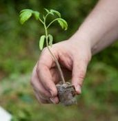 Как выбрать саженцы и рассаду