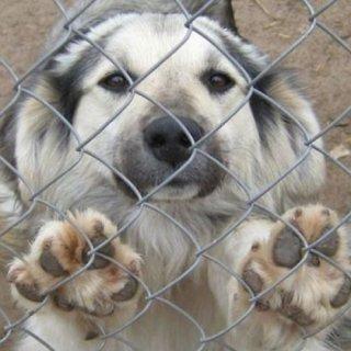 Рейды по отлову бездомных животных регулярно проводятся на территории УГО