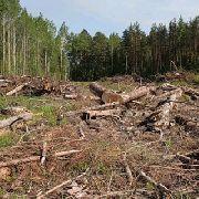 Вывозят лес