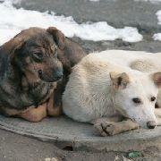 В Уссурийске проводится проверка по факту обнаружения останков собак