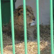 Для школьников из Уссурийска уроки биологии будут проходить в городском парке, где находится зооэкспозиция