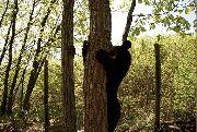 Судьба медвежьего питомника под Уссурийском по-прежнему вызывает опасения
