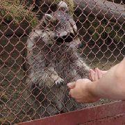 В Уссурийске появится еще один частный зоопарк