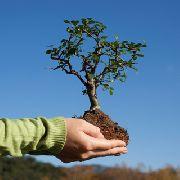 Срубил одно дерево посади пять
