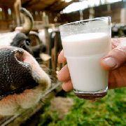 В молоке уссурийских производителей обнаружены опасные бактерии