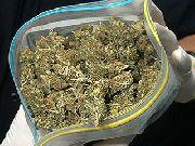 Более 7 кг марихуаны изъято у жителя Уссурийского района