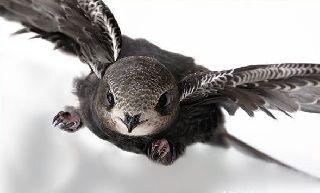 Назван вид птиц способных летать 10 месяцев без остановки
