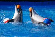 Приморский океанариум готовит для посетителей сюрприз