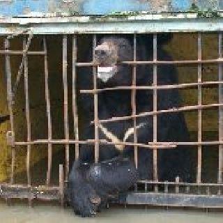 Полиция возбудила уголовные дела по фактам гибели животных в зоопарках Уссурийска
