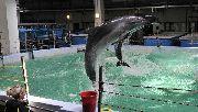 Животные в Приморском океанариуме погибли от насильственных действий