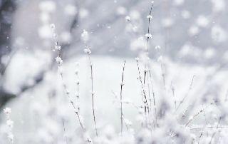 ФОТОФАКТ: Первый снег выпал в Карелии