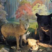 Уссурийцам открыли сокровищницу музея (15 фотографий)