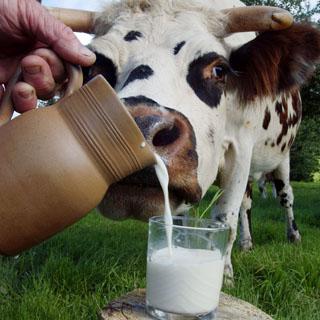 И снова небезопасное молоко