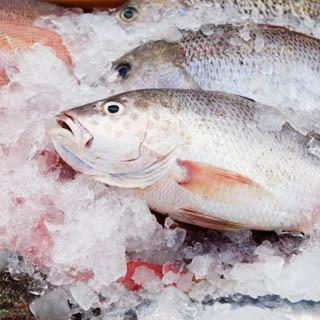 Около тонны опасной рыбы нашли в магазине Уссурийска