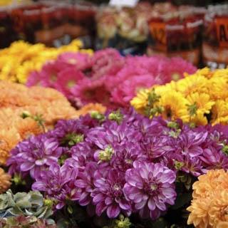 В Уссурийск могли завезти зараженные цветы
