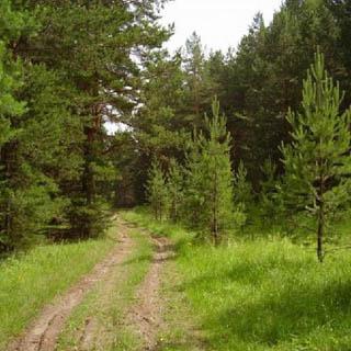 Городские леса – управлению благоустройства
