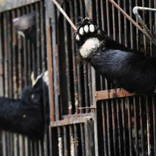 На общественные слушания по поводу строительства зоопарка придут зоозащитники и эксперты