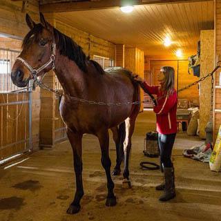 Уссурийский конно-спортивный клуб нарушал правила содержания лошадей