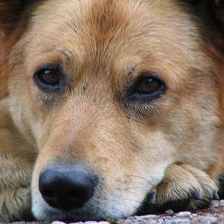 В Уссурийске пойман собачий Чикатило