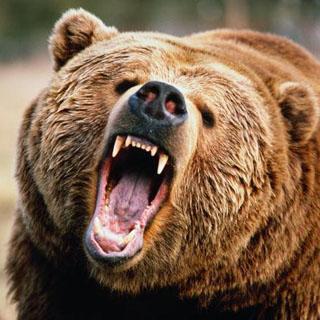 Медведи вышли на тропу войны