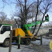 Обрезка деревьев в Уссурийске ведется каждый день (5 фотографий)
