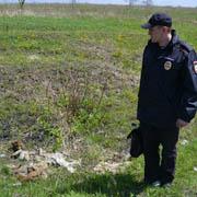 По факту обнаружения останков собак в Уссурийске возбуждено уголовное дело