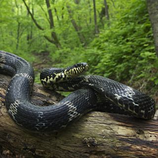 Внимание жители Уссурийска, змея!