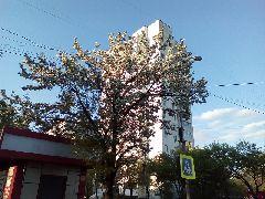 Фото Уссурийска